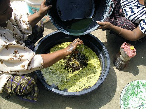 Preparing the oil mordant for the Morinda red dye in Ndona Flores