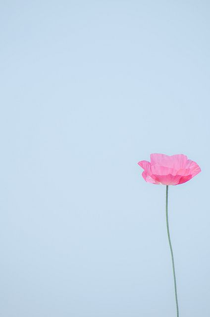 pale blue backgrounnd with one pink flower bloom in the lower right corner