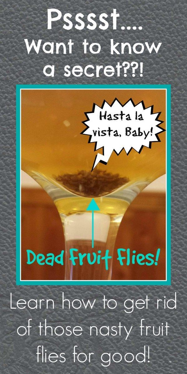 The Flyest Fruit Fly Trap Ever! - [Dr. Sista-Thang-Says!]