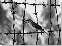 1K Криминал :: Шанс на исправление: не тюрьма, а общественные работы.