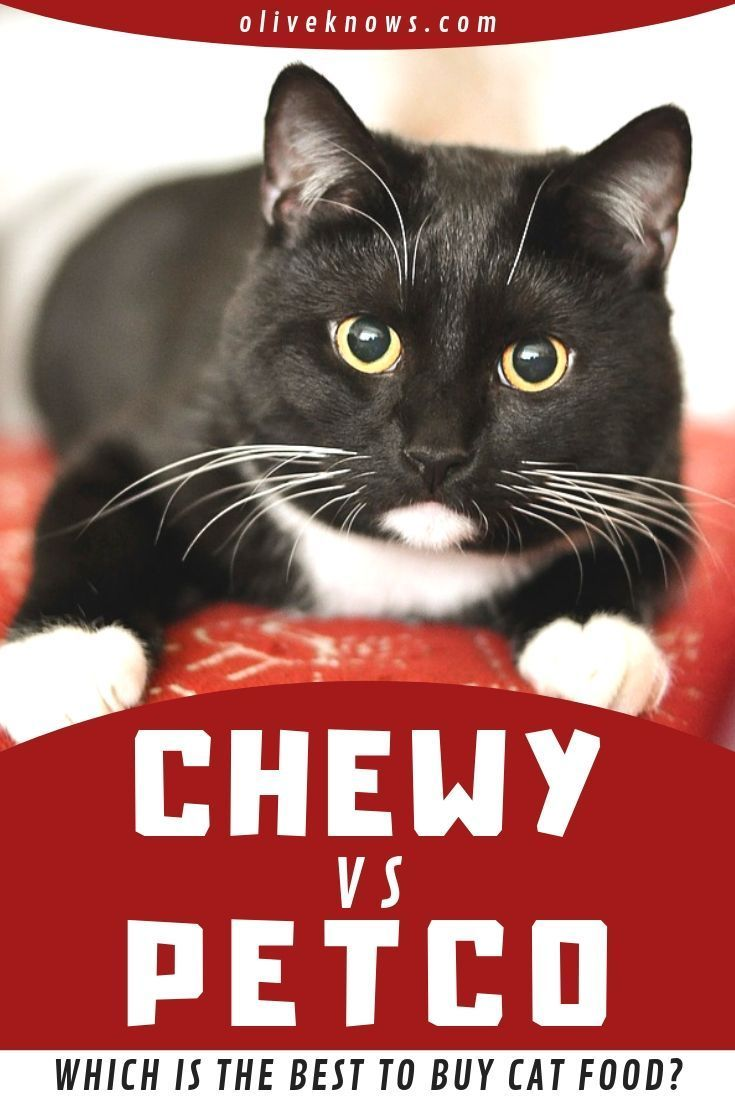 Chewy vs Petco [2019] Which is Best to Buy Cat Food?