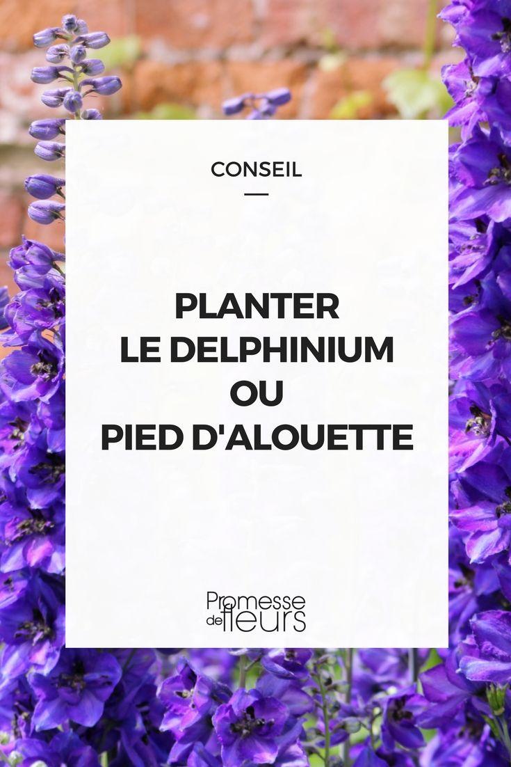 255 best conseils astuces et visites de jardins images on for Conseil plantation jardin