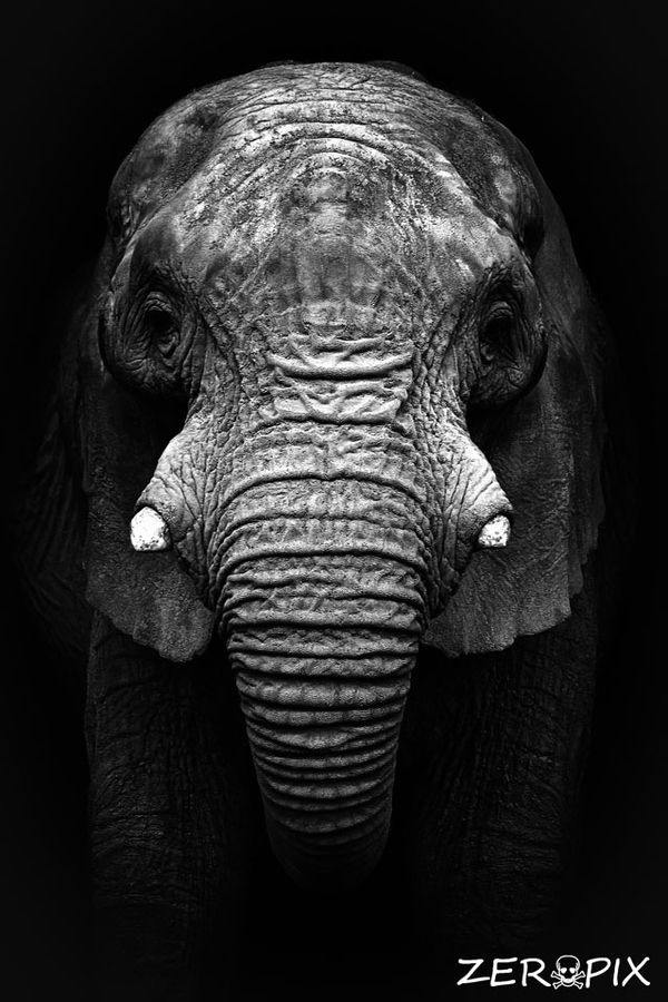 25 Best Monochrome Realistic Photography for Inspiration