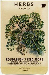 free printable digital image design resource ~ vintage seed packet ~ caraway