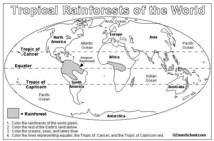 rainforest map activity/coloring