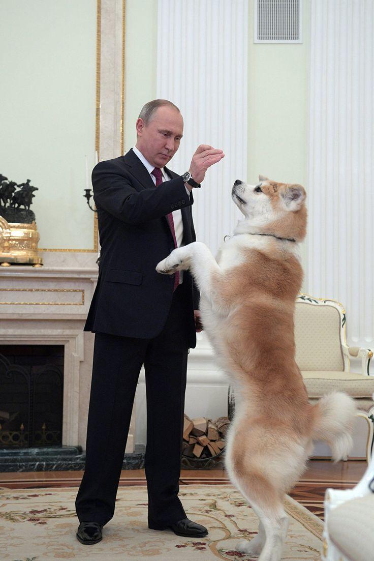Путин, представляя журналистам Юмэ, предупредил, что это строгая собака | РИА Новости - события в России и мире: темы дня, фото, видео, инфографика, радио
