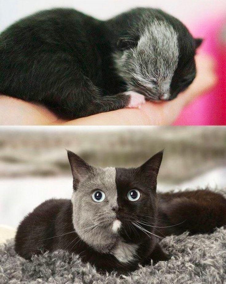 "** ""Sure looked scrag-bag az a kitten. Purrfect nowz."""