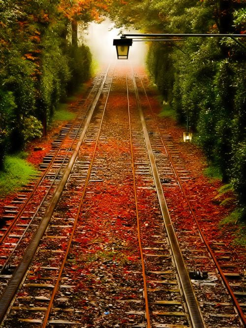 Beautiful place for railroad track right in the woods so beautiful and
