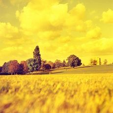 Yellow series - Landscape by Lisa Barber
