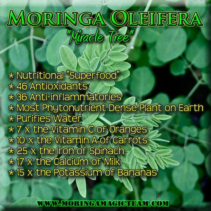 Weight Loss Moringa Tree: 30 Best Moringa & Olive Leaf Extract Images On Pinterest
