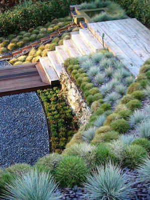 Rows of blue fescue & other similar succulent plants in lieu of groundcover