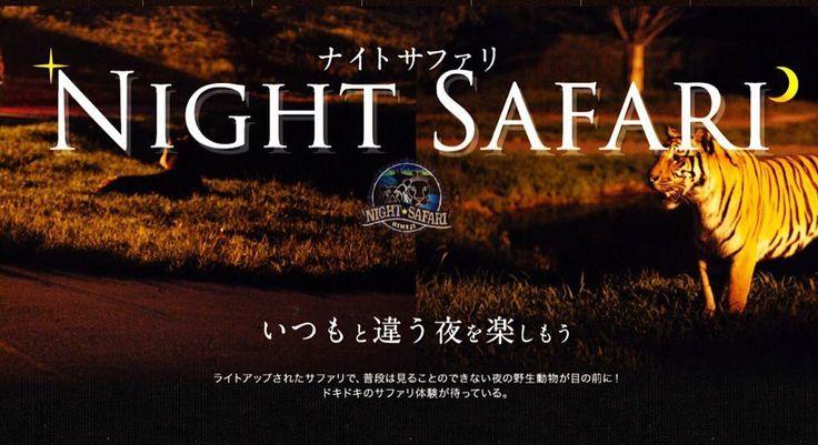 """姫路セントラルパーク☆サファリ (@hcpsafari) on Instagram: """"本日よりナイトサファリ始まります♪ 夜の動物達の姿、日中とは違う魅力があります! この夏、ドキドキのサファリ体験いかがですか♡ 詳細は姫センHP (http://www.central-…"""""""