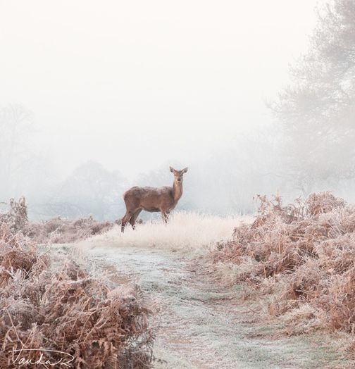Frosty Morning in London, England. Red Deer #LIFECommunity #Favorites From Pin Board #15