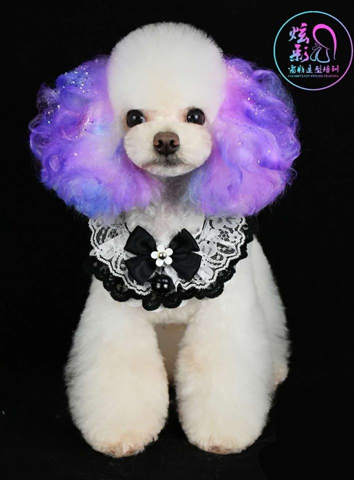 Opawz Permanent Dye For Dog And Horse In 2020 Dog Hair Dye Creative Grooming Poodle Haircut