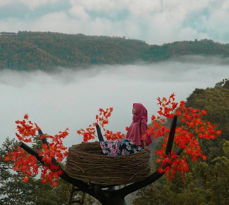 Menilik Keindahan Bukit Mojo Gumelem Yang Instagramable
