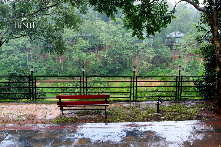 #TheIbnii_Coorg #TheIbnii_Pure experience