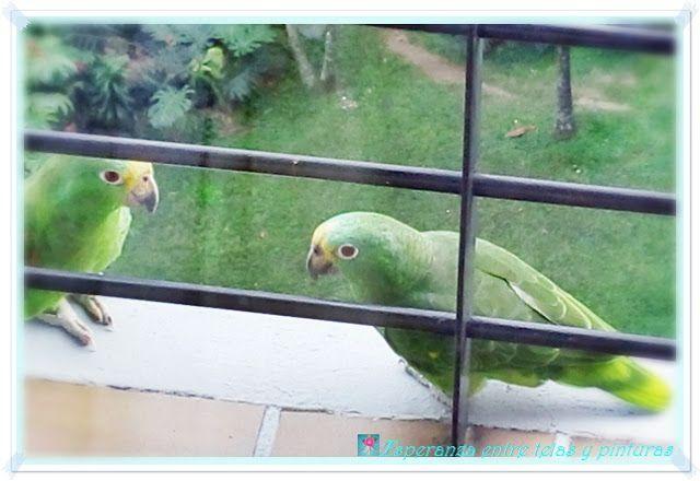 Esperanza entre telas y pinturas: Bolso Pom Poms y una visita en mi balcón!!