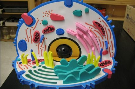 Make a model of a cell. Research the anatomy of a cell, then make it out of food, clay, or any other material.