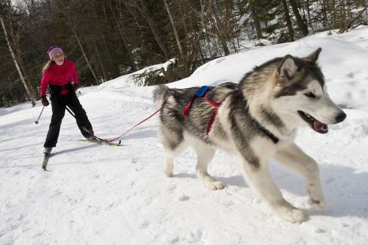Learn to Skijor in Arrowhead Provincial Park
