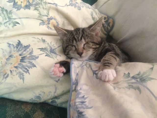 Cat nap time :-)