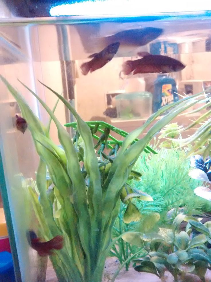 Ever wonder how to Set up a betta sorority? Heres how i did it!