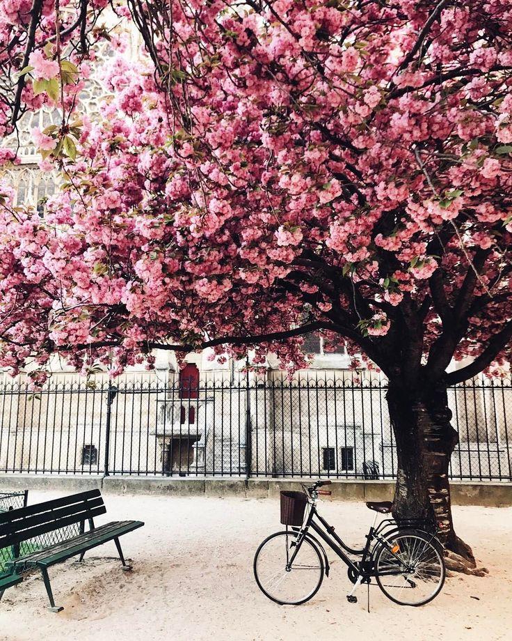 3,478 отметок «Нравится», 96 комментариев — Anna Yakovleva (@annayakovleva_com) в Instagram: «Can I post it everyday? Можно я буду постить розовые деревья до конца весны? У меня миллион…»