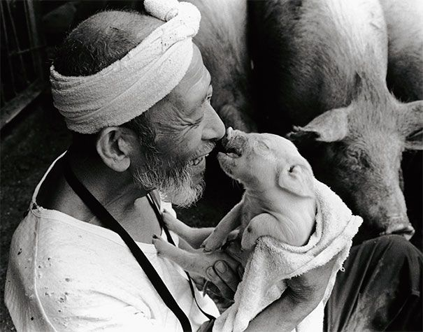 Toshiteru Yamaji picturs of Otchan. He's a pig farmer who shares a beautiful relationship with his cuddly pink creatures – all 1,200 of them.