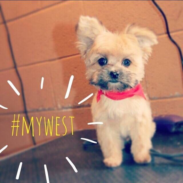 Bentley is excited for #BandannaWeek and so are we! This week only, receive FREE admission when you wear a bandanna to the Museum. Don't forget to post your pet wearing their very own bandanna and use #mywest for a chance to win a gift card to the Museum Store! #spring #fashion #bandanna #free #museum #exhibition #art #dog #cat #puppy #adoption #OKC #seeOKC #visitOKC #myOKCstory #mywest #community #kids #families #dogsofinstagram #western #native #local #history #pets #heritage