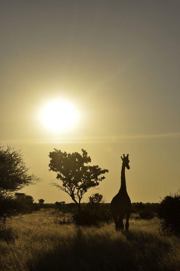 Central Kalahari Game Reserve, Botswana - Africa's 10 Best National Parks