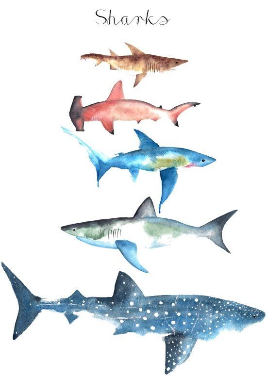 Sharks Art Print Creatures Shark Art Shark Tattoos