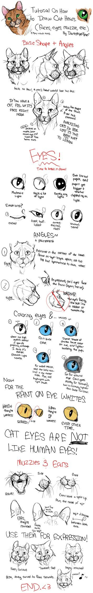 How to Draw Cat Heads by *Darkstripe4ever