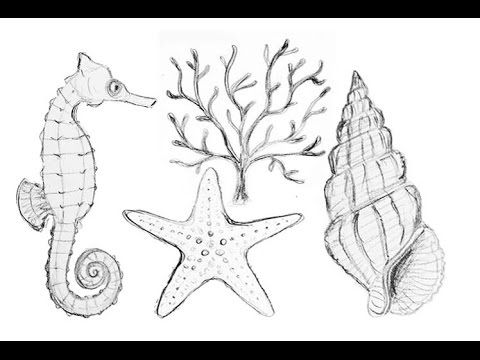 Nautical Sea Life Drawings   How to Draw Starfish Coral Seahorse & Seashell   Part 1 - YouTube