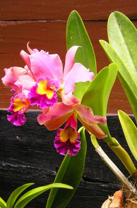Flowers in Lake Toba, Sumatra. More on this beautiful island: http://bbqboy.net/misadventures-in-lake-toba-sumatra/ #indonesia #laketoba
