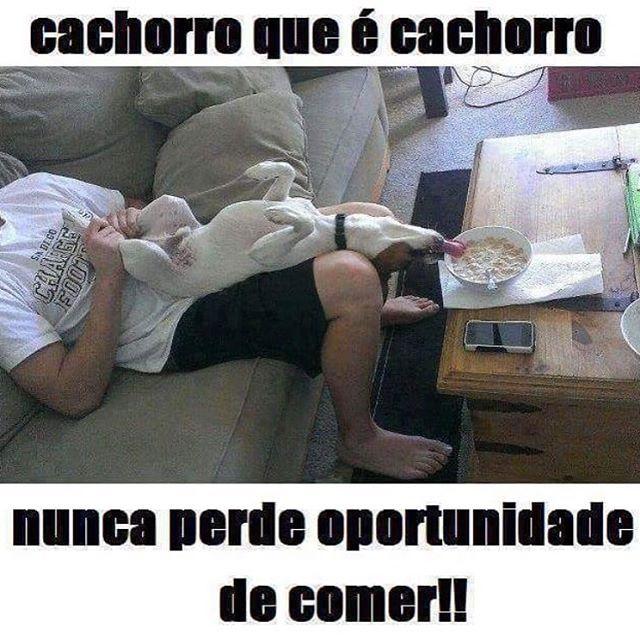 #petmeupet  #cachorroétudodebom  #amocachorro  #cachorro  #filhode4patas