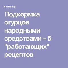 """Подкормка огурцов народными средствами – 5 """"работающих"""" рецептов"""