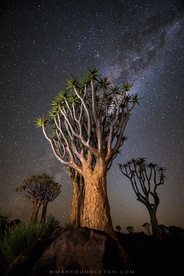 Nocturnal Trio by Mark Dumbleton - Photo 155106755 - 500px
