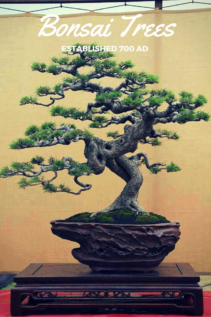 1000 Images About DIY Home Decor It Is Simple Add A Bonsai