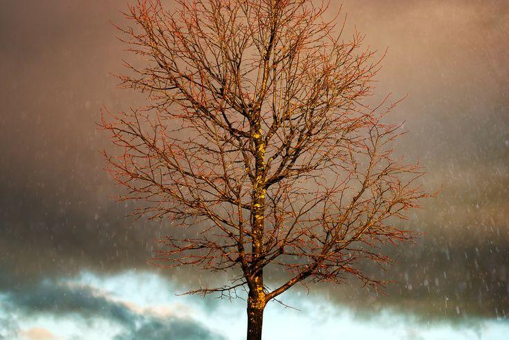 500px / Gold Tree by Pedro Pinho