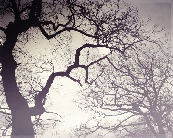 winter trees  -  fine art photograph - nature - lost