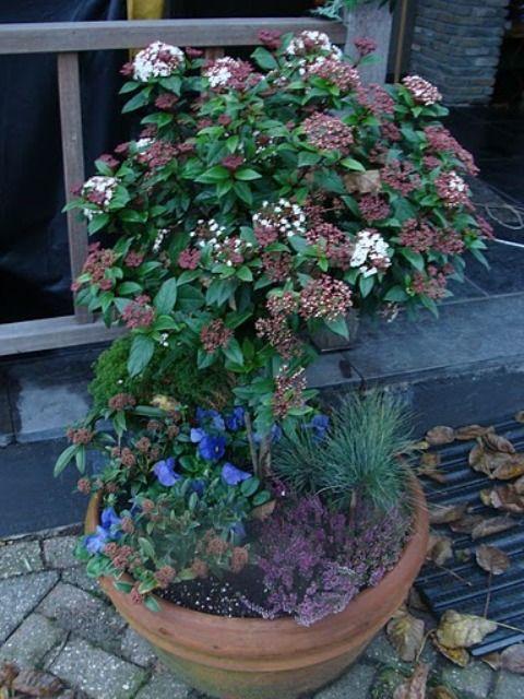plantenbak buiten in de herfst, bij mijzelf