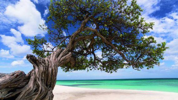 Aruba e le sue meravigliose spiagge! Fuori dalla rotta degli uragani, è la destinazione perfetta tutto l'anno! Clicca per vedere i pacchetti viaggio!