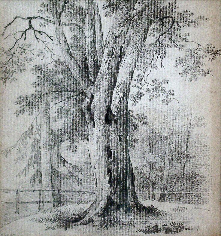 деревья рисунок графика обратной стороне