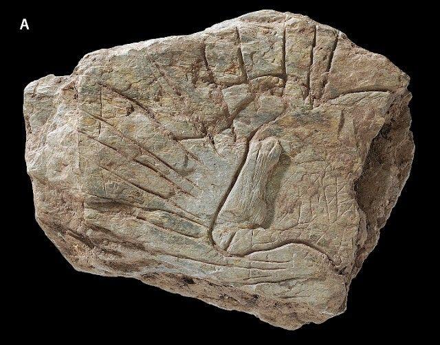 Fransada 14 Bin Yıllık sanat örnekleri