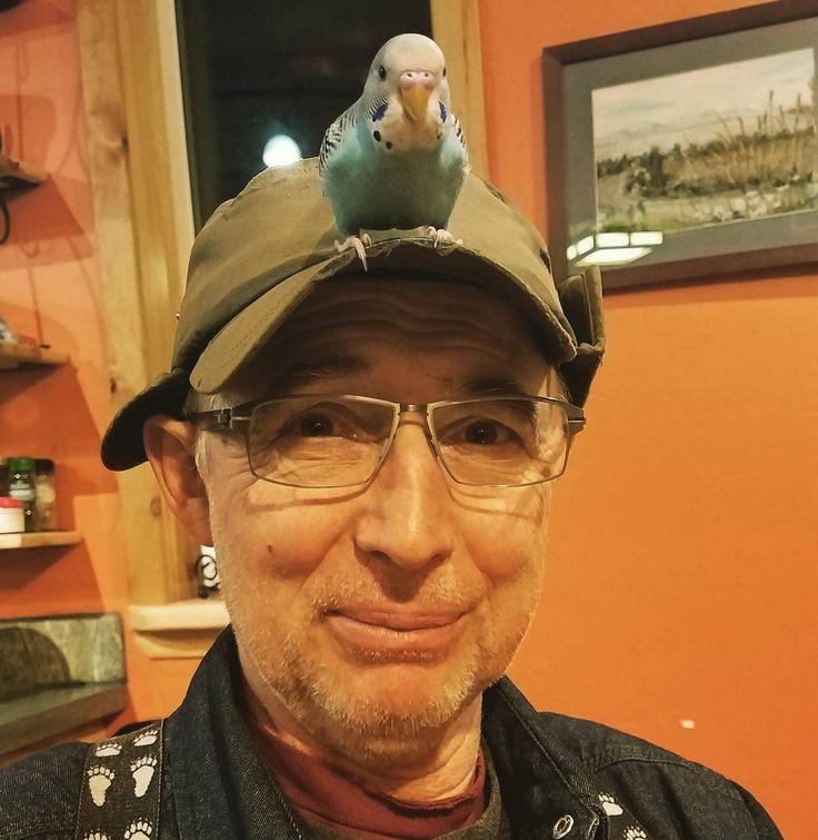 """Eve Kilcher on Instagram: """"Coco took a liking to Grandpa Otto @otto_kilcher. So fun having this sweet bird as part of our family. . . #homesteadkitchen #homesteading #atlf #alaska #alaskatlf #wildandfree #parakeets #parakeet"""""""
