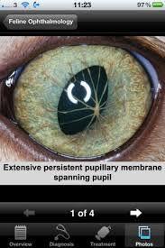 feline ophthalmology - Szukaj w Google