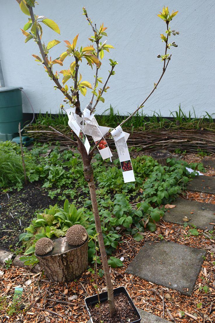 11 best grafting images on pinterest organic gardening fruit