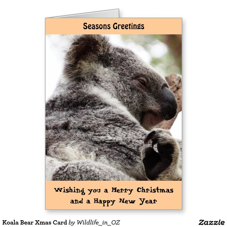 Koala Bear Xmas Card - Australian Wildlife. Click on photo to view item then click on item to see how to purchase that item. #christmascard #xmascard #koala #koalabear #wildlife #australianwildlife #zazzle