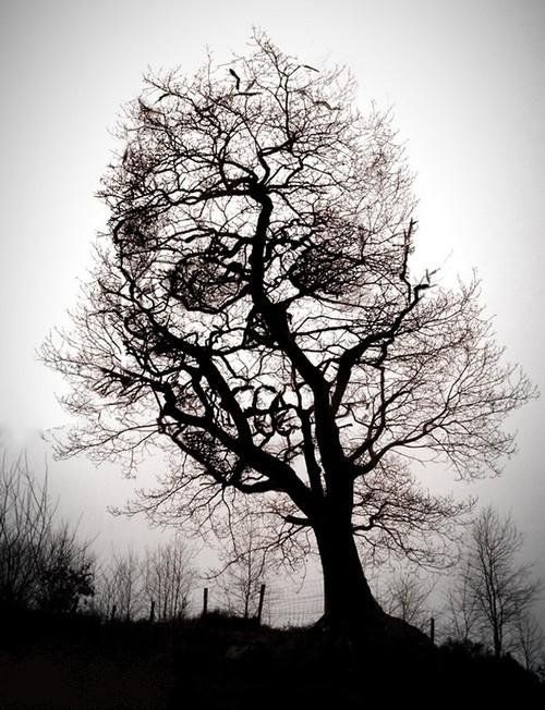 The skull within the tree.