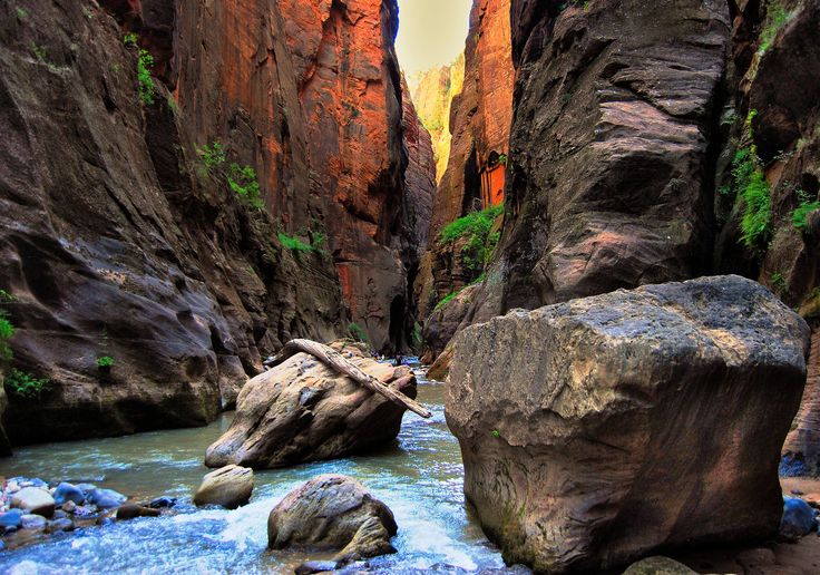 I walked 16 miles through The Narrows at Zion National Park, UT a few weeks ago. This was my favorite picture(cellphone).