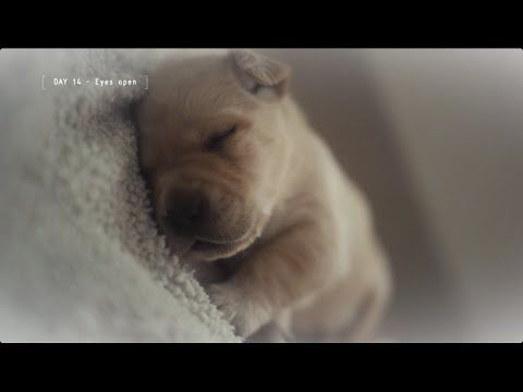 IBM Cloud Computing / Guiding Eyes for the Blind: Jackson | Ads of the World™